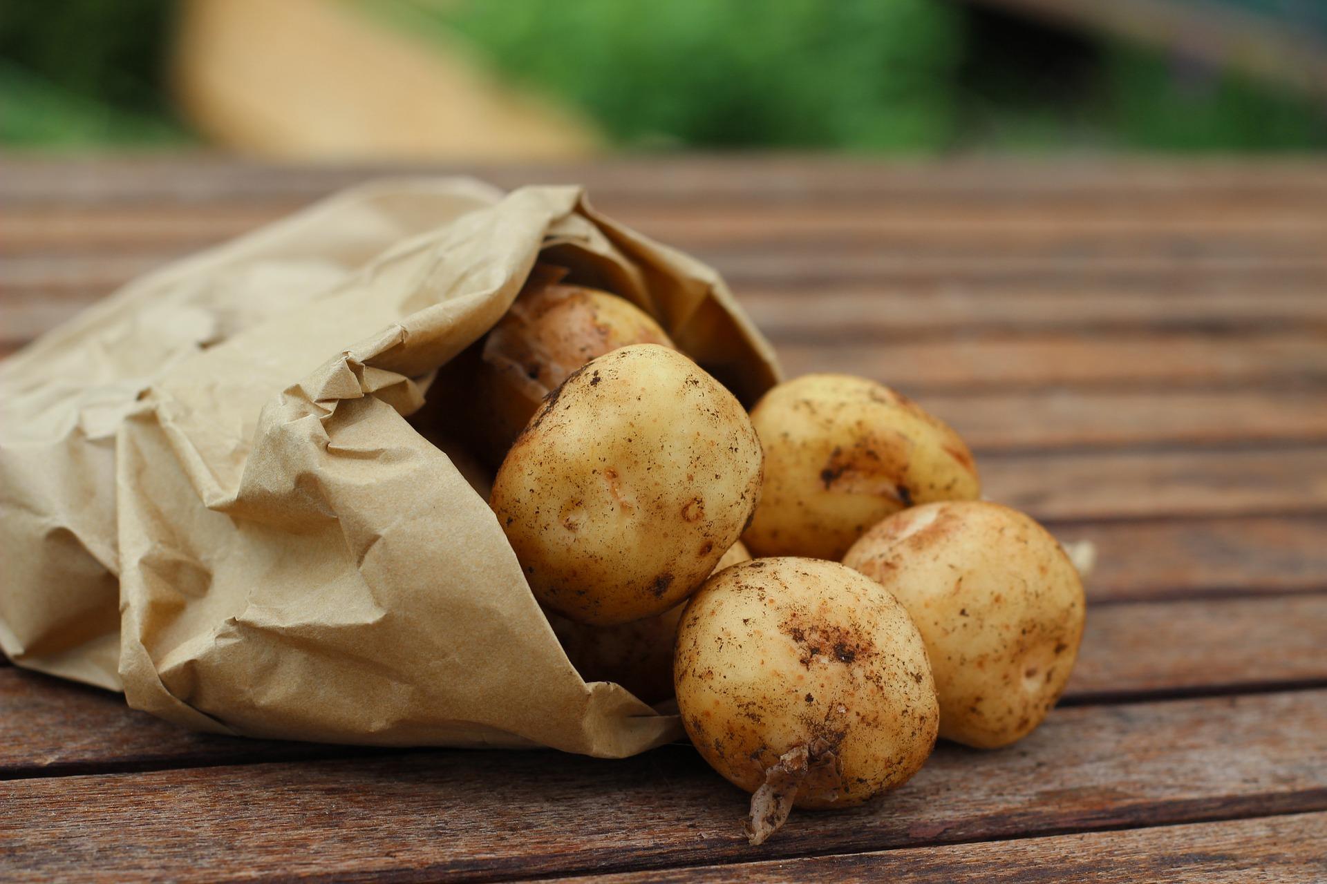 patate e solanina